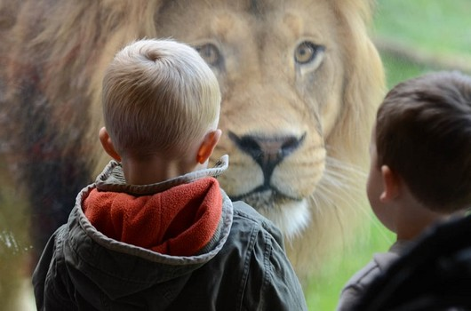 zoo_lion.jpg