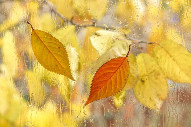 Autumn Leaves.jpg