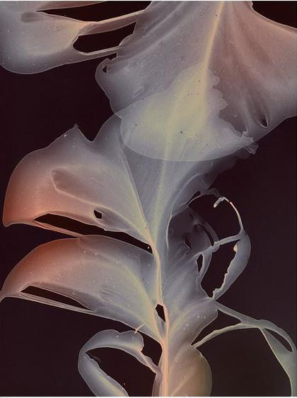 Marta_SPENDOWSKA_ABSTRACT_FLORA